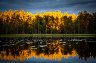 aspens-reflected-in-water